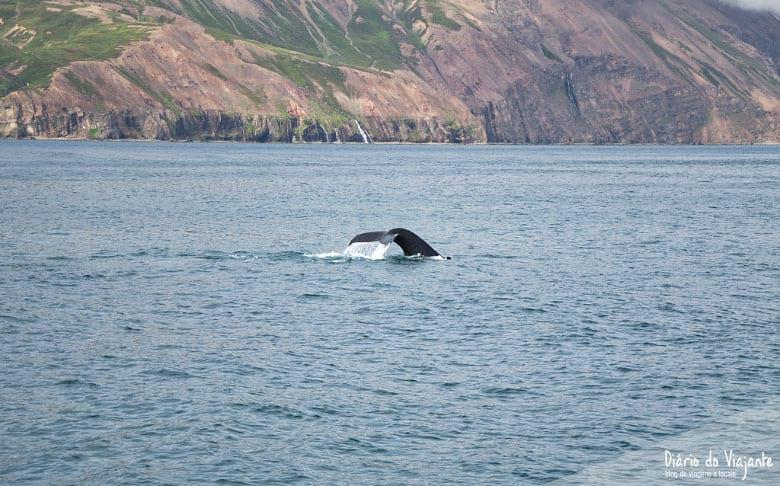 Húsavík, o ponto de partida para observar baleias | Diário do Viajante